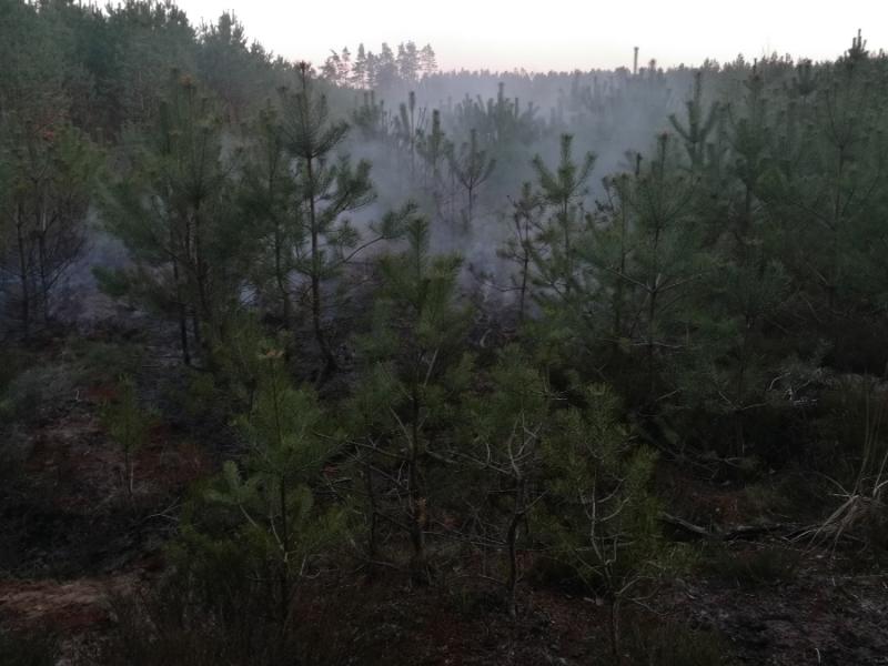 Pozar poszycia leśnego w Jasieniu
