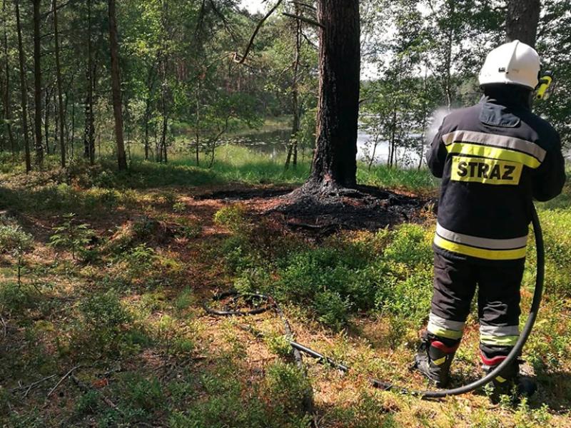 Pożar poszycia leśnego w Nożynie